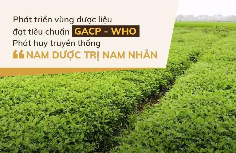 Cận cảnh vườn thảo dược sạch của nhà thuốc Đỗ Minh Đường