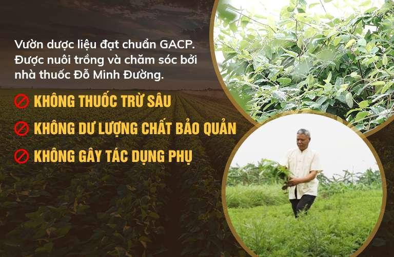 Cam kết 100% dược liệu sạch, đạt tiêu chuẩn GACP-WHO