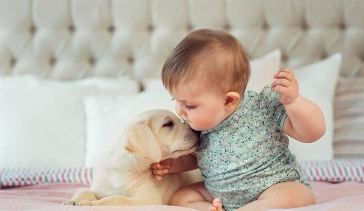 Hạn chế cho trẻ nhỏ tiếp xúc với vật nuôi để ngăn ngừa nguy cơ lây nhiễm nấm và các bệnh do ký sinh trùng