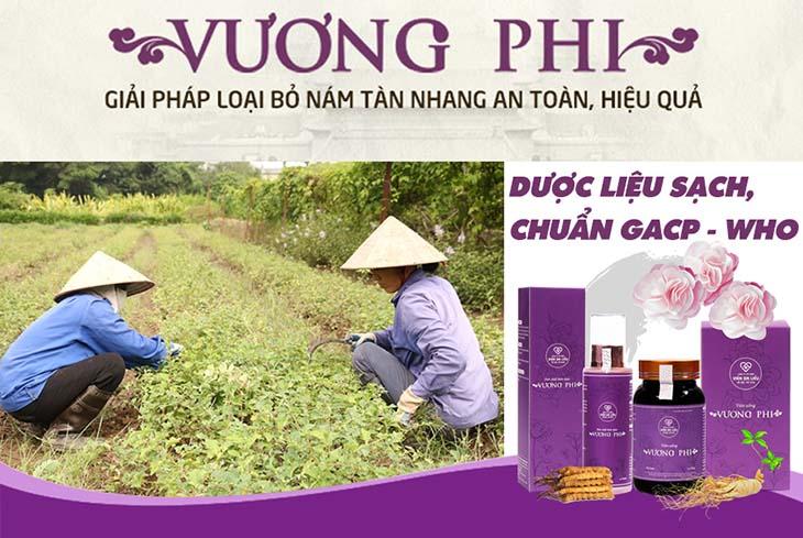 Dược liệu sử dụng trong Bộ sản phẩm Nám - Tàn nhang Vương Phi đều đảm bảo sạch, dược tính cao