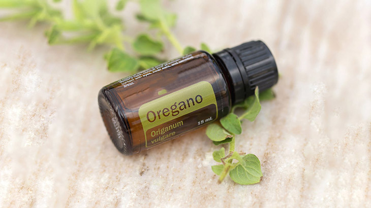 Tinh dầu oregano chứa carvacrol - một hoạt chất có khả năng kháng nấm mạnh mẽ