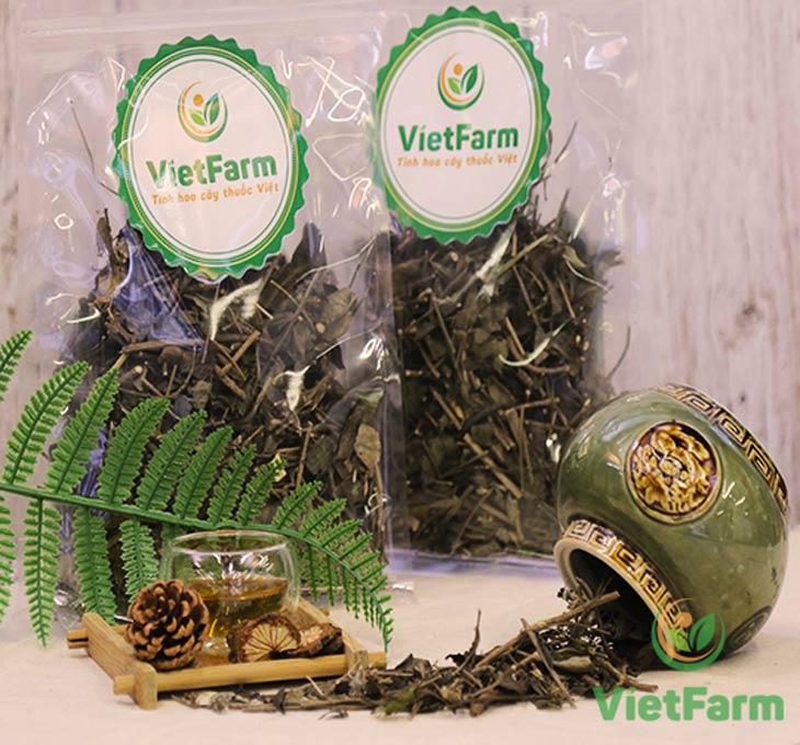 Dược liệu xương khỉ Vietfarm đạt chuẩn GACP - WHO