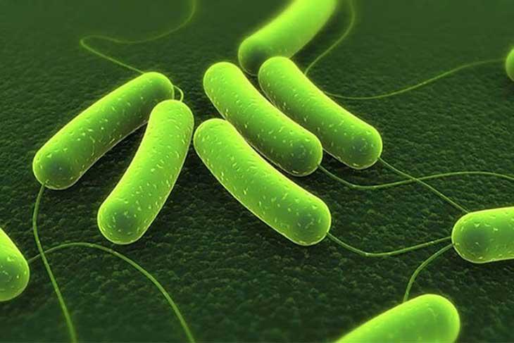 Cách chữa vi khuẩn HP bằng thuốc nam phù hợp với tình trạng bệnh ở giai đoạn đầu