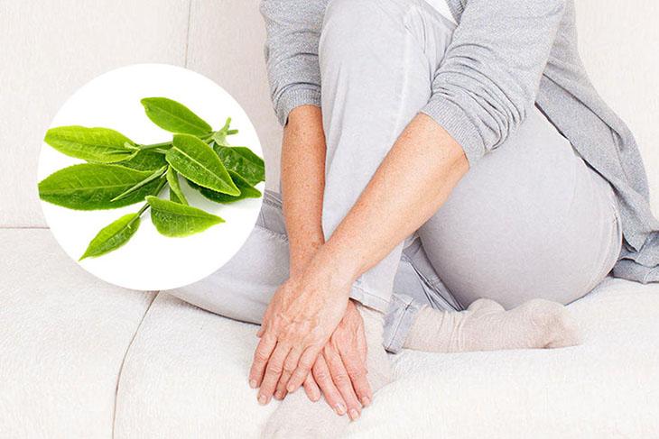 Lá trà xanh thường được dân gian sử dụng để chữa các bệnh về huyết trắng