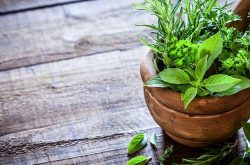 Tổng hợp những cây thuốc nam chữa viêm loét dạ dày hiệu quả