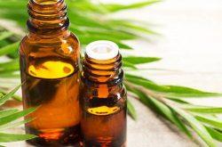 Tinh dầu tràm có công dụng kháng viêm, tiêu khuẩn, sát trùng