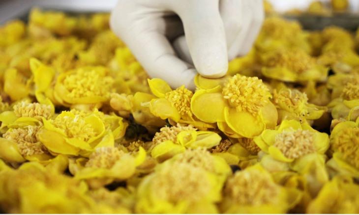 Trà hoa vàng khô - vị thuốc phổ biến trong Đông y