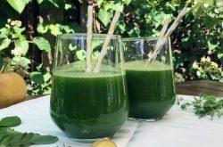 Uống nước rau ngót giúp hỗ trợ đào thải các nguyên nhân gây thâm sạm từ bên trong