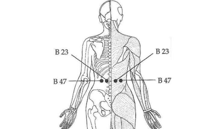 Vị trí huyệt B23 và B47