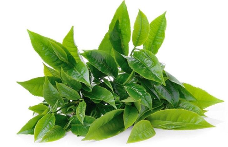Lá trà xanh giúp kiểm soát hiệu quả tình trạng huyết trắng bệnh lý