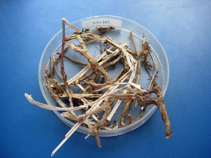 Sài hồ là một trong những vị thuốc chữa hội chứng ruột kích thích hiệu quả