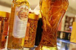 Bài thuốc với rượu trùng thảo mang lại nhiều lợi ích cho cơ thể