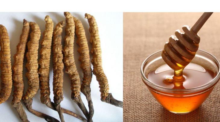 Đông trùng hạ thảo ngâm mật ong đơn giản, dễ làm