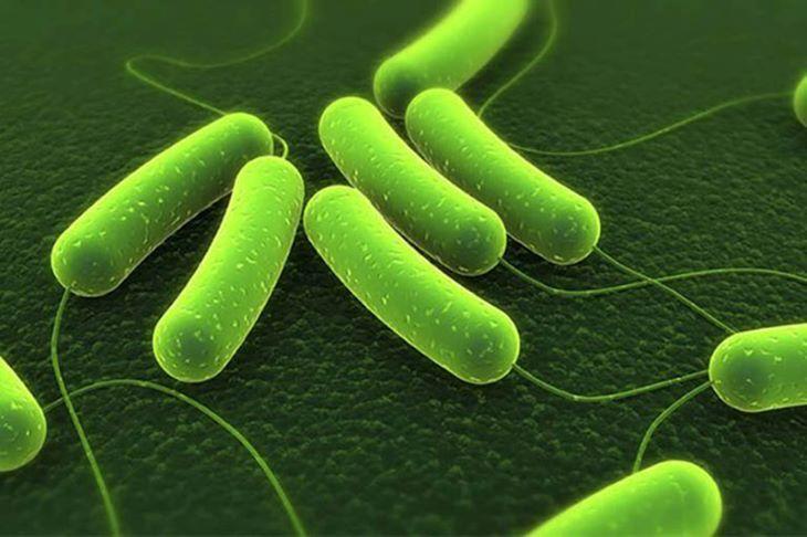 Hướng dẫn các cách tiêu diệt vi khuẩn Hp tận gốc hiệu quả