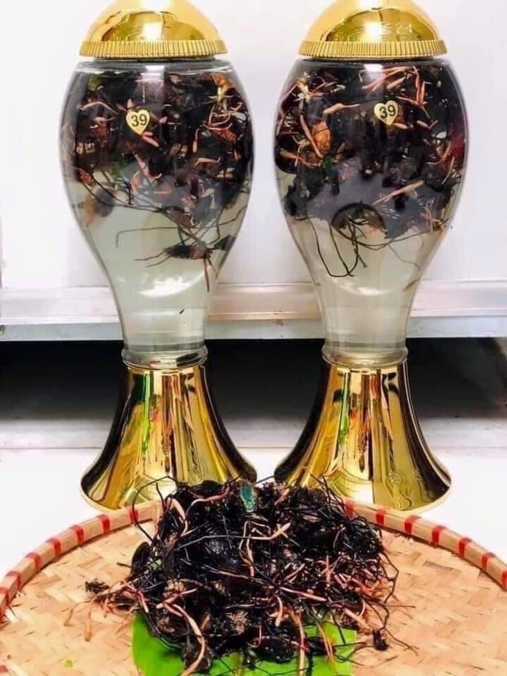 Cách ngâm rượu đông trùng hạ thảo bọ xít