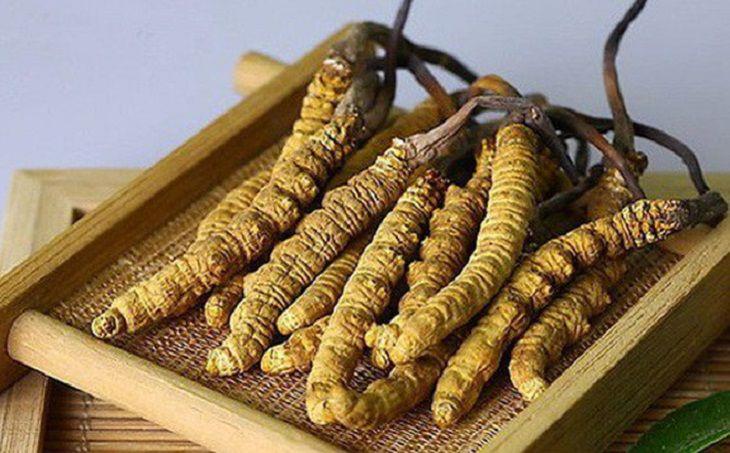 Đông trùng hạ thảo Tây Tạng là loại đông trùng dược thảo quý hiếm nhất và có giá thành đắt nhất