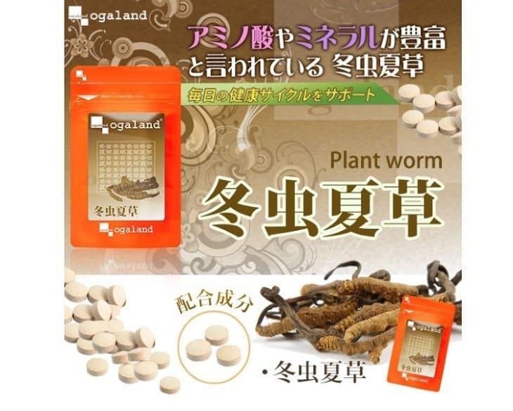 Đông trùng hạ thảo Nhật Bản Ogaland