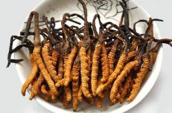 Đông trùng hạ thảo Tây Tạng có nguồn gốc từ cao nguyên Tây Tạng, Trung Quốc