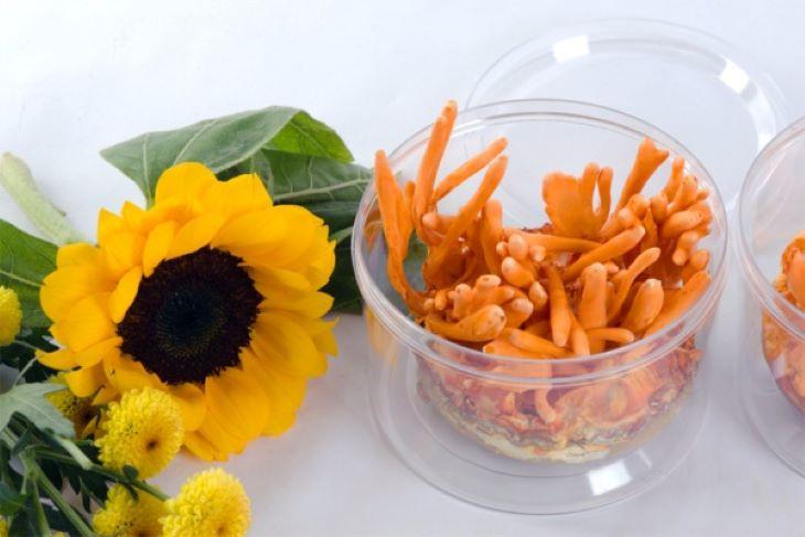 Giá bán trùng thảo phụ thuộc vào chất lượng và nguồn gốc xuất xứ