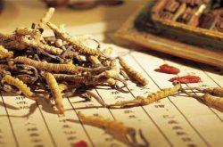 Đông trùng hạ thảo Quảng Nam có những tác dụng gì?