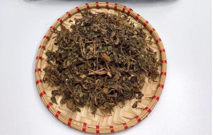 Lá đinh lăng sau khi thu hoạch, làm sạch thì sẽ được đem sấy hoặc phơi khô