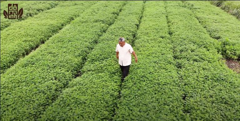 Hình ảnh vườn dược liệu sạch của Đỗ Minh Đường