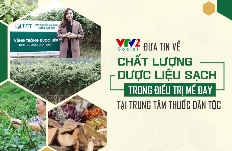 Vườn dược liệu của Trung tâm Thuốc dân tộc được VTV2 đưa tin