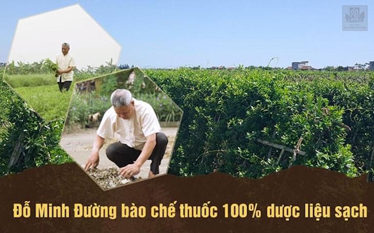 Nhà thuốc Đỗ Minh Đường có 3 vườn thảo dược sạch chuyên biệt ở Hòa Bình, Hưng Yên và Gia Lâm (Hà Nội)