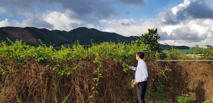 Vùng trồng dược liệu sạch do chính bệnh viện Xương khớp Quân dân 102 phát triển