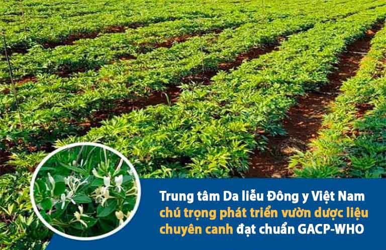 Trung tâm Da liễu Đông y Việt Nam tự chủ các vườn dược liệu chuyên canh trên cả nước